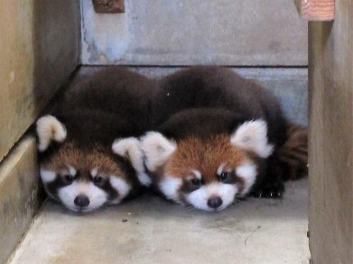 引用:八木山動物公園