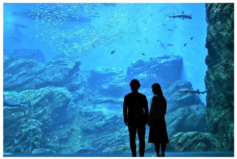 引用:仙台うみの杜水族館